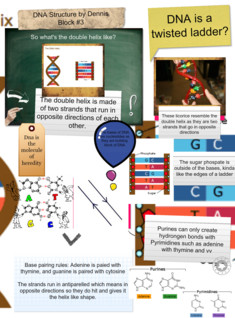 DNA- Visual Structure Project