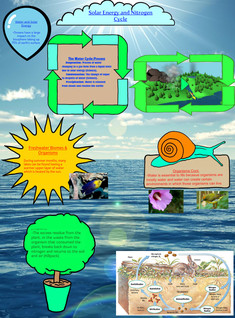 Water and Nitrogen Cycle Bio Project