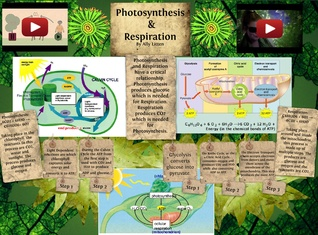 [2015] Allyson Litten: Photosynthesis & Respiration