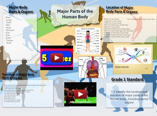 Major Parts of the Human Body