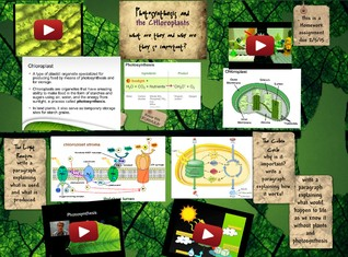 Photosynthesis And The Chloroplasts