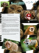 Monkeys' thumbnail