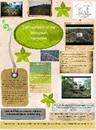 deforestation of the malaysian rainforest maikeeeee's thumbnail