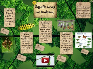Butterfly Growth and Development