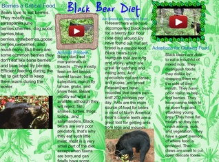 Black Bear Diet