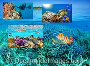 McCoskey's Coral Reef Informative Brochure's thumbnail