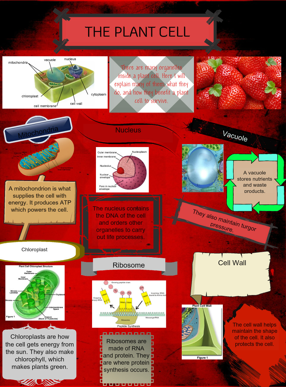 Plant Cell Bioogy En Science Glogster Edu Mitochondria Are Often Called The Power Of
