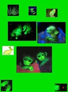 glow animals's thumbnail