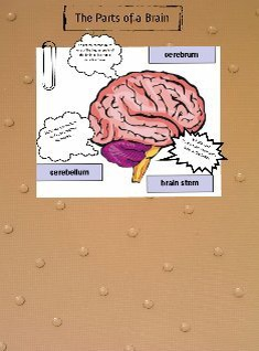 Parts of a Brain