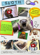 New Glog sloth's thumbnail