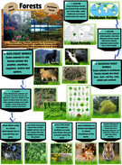 Forests Informational text's thumbnail