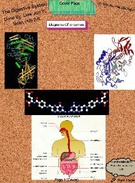 The Digestive System's thumbnail