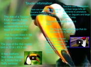 Toucan information by Bryn Button's thumbnail