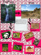Group Project/ Rainforest and Desert's thumbnail