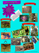 Tropical Rainforest Sydney Davis and Abbie Hall thumbnail