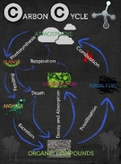 Carbon Cycle's thumbnail