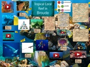 Tropical Coral Reef in Broude's thumbnail