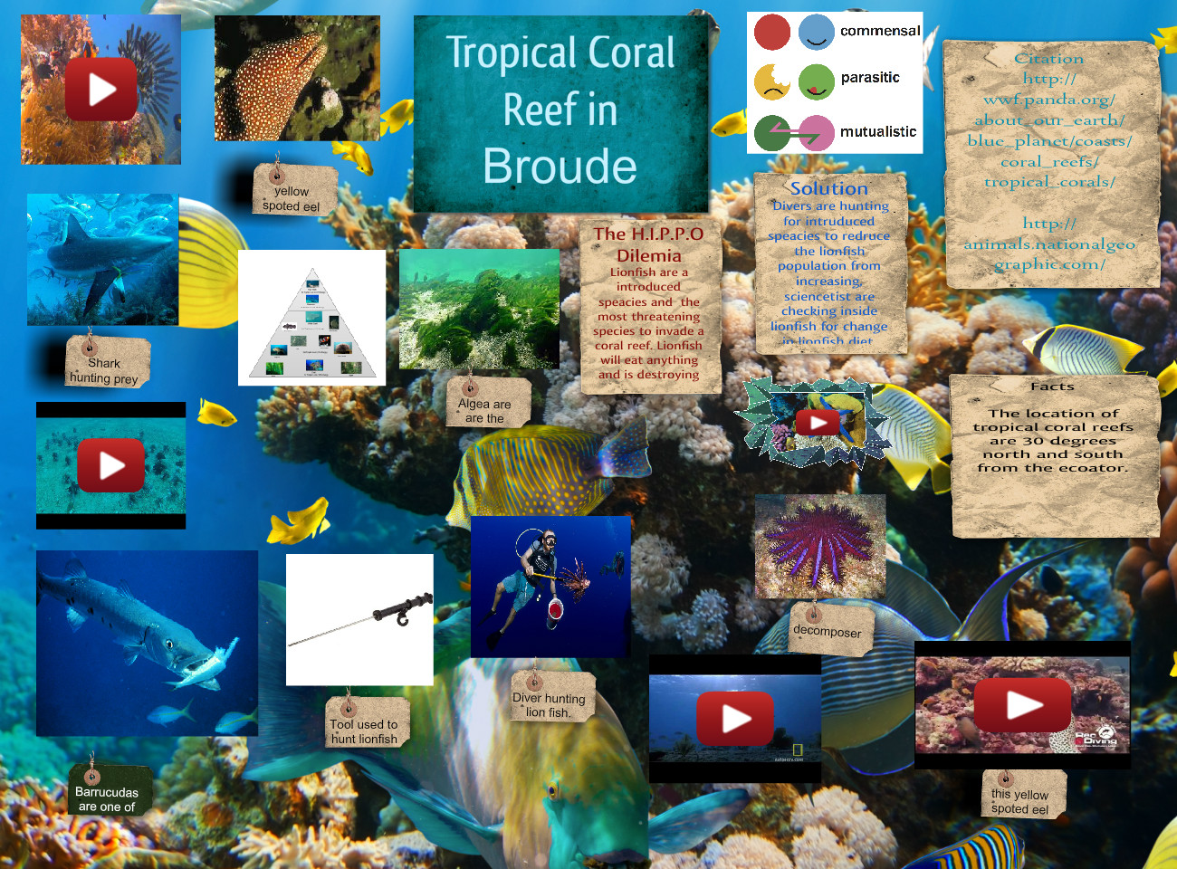 Tropical Coral Reef in Broude